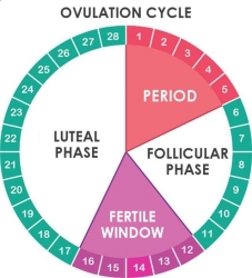 Women's Health ; Easiest Way to Calculate Menstrual Cycle and Safest Way to Get Pregnant Without Stress