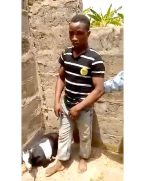 A Young Man Rapes a Goat in Ekiti State