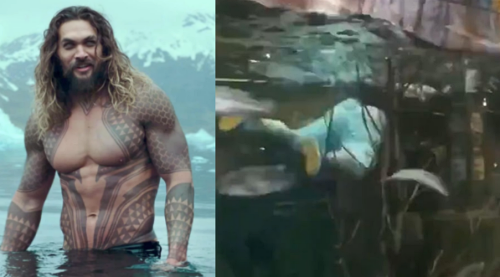 Louisiana AquaMan Swims with Fishes in Bass Pro Shop's Aquarium, Cops are Fishing for Him
