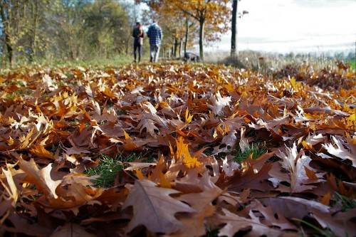 Do Fallen Leaves Remind You Of Me – Poem