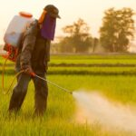 Mexican Crops Rejoices As They Plan To Ban Monsanto's Glyphosate Herbicide