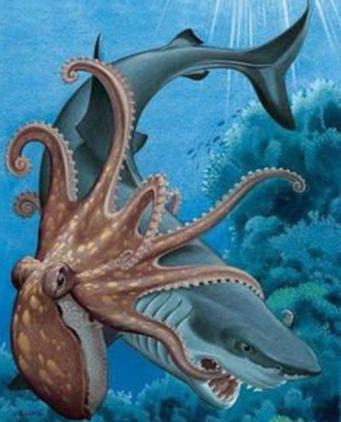 Octopuses- sinzuuliveblog