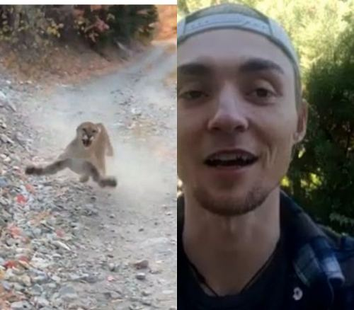 Utah Hiker Evades Death After Being Stalked By A Wild Mother Cougar