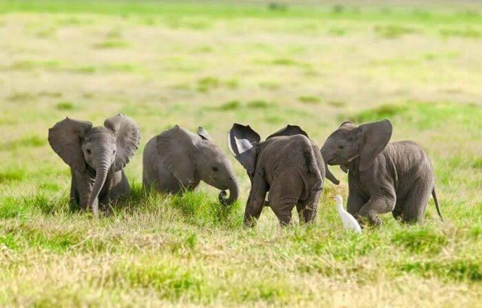 Elephant- sinzuuliveblog