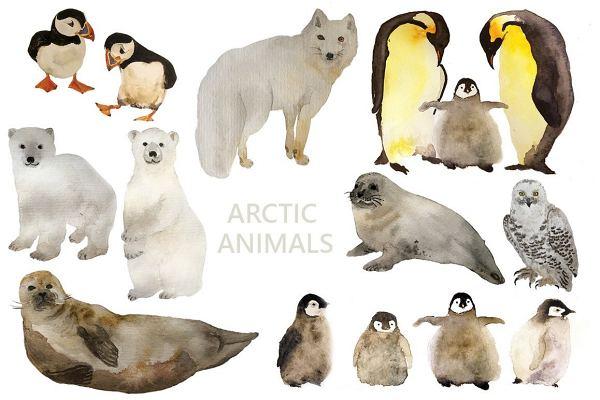 Arctic- sinzuuliveblog
