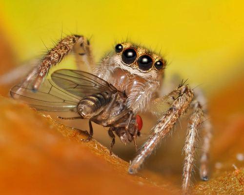 spider- sinzuuliveblog