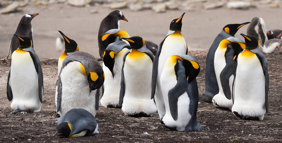 Building AI's Foundation, One Penguin at a Time