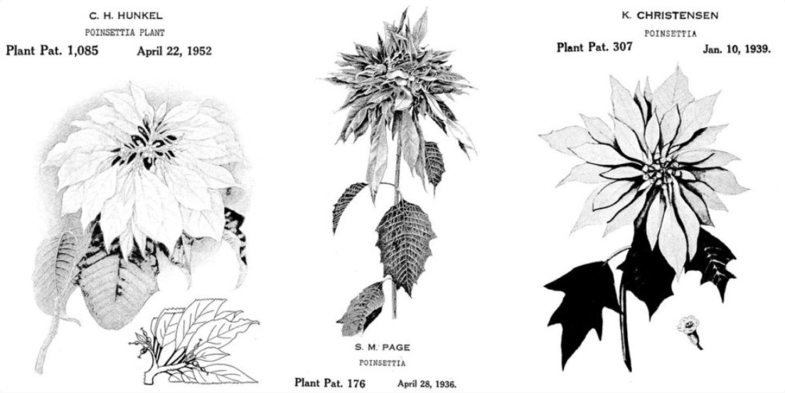 What Does It Take to Get a Plant Patent?