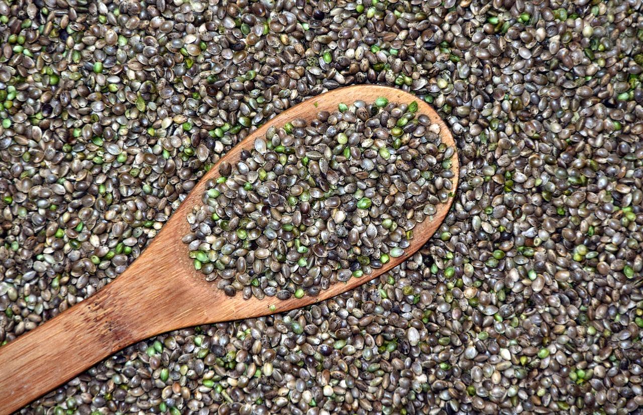 hemp, cannabis seeds, grains