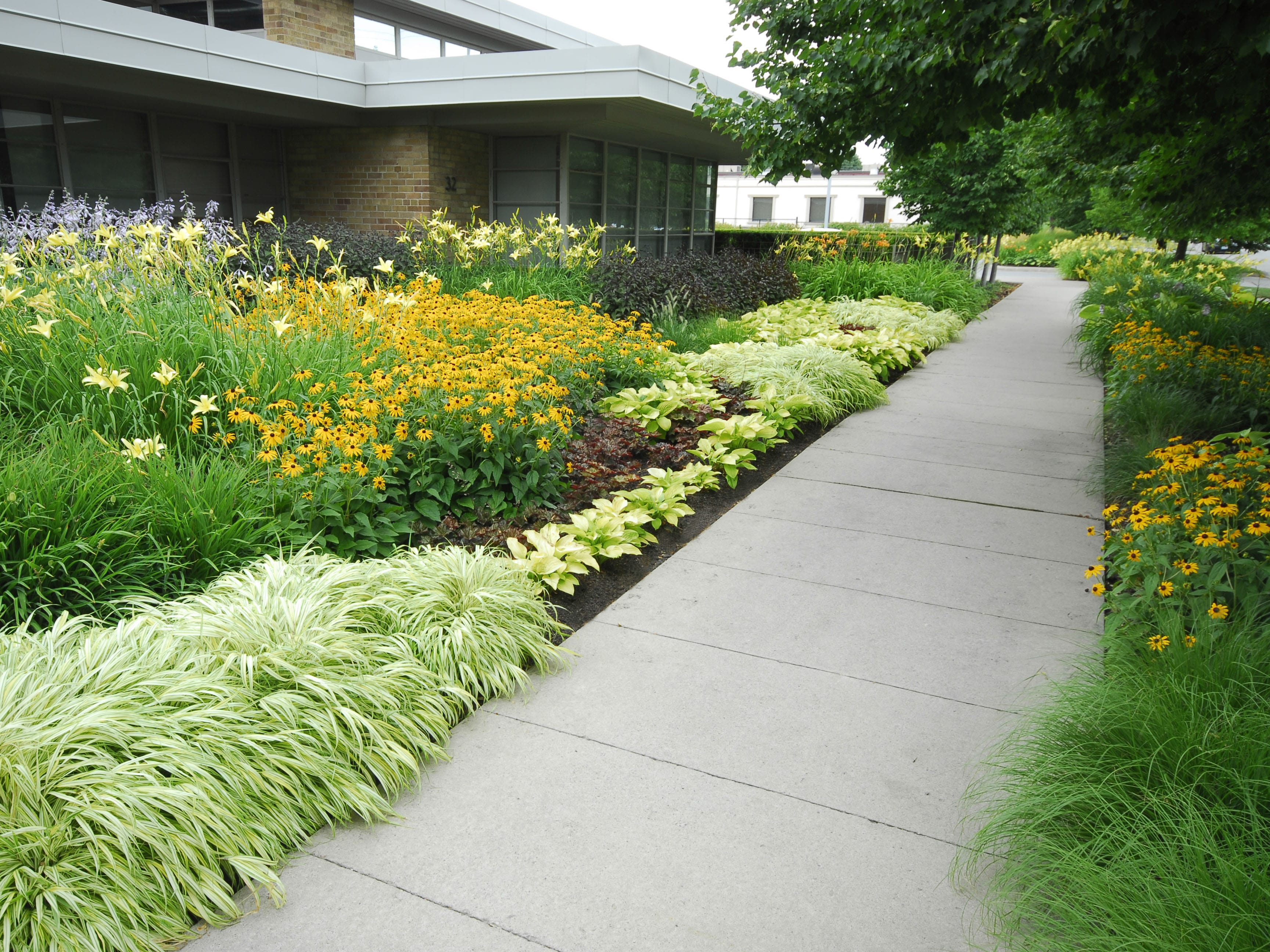 Service: planting. Yellow, green and purple flowers lined beside a sidewalk