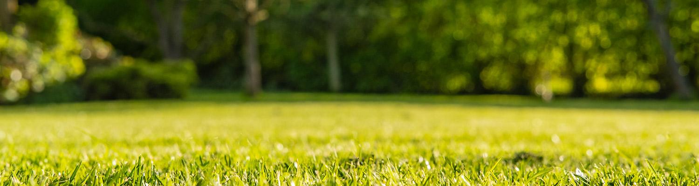 fall-grass-seeding