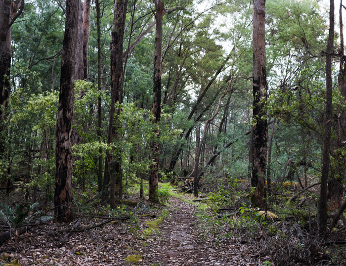 Timberline-trail-near-nannup