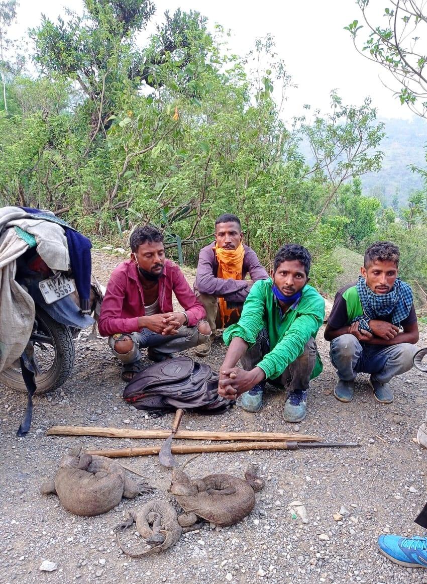 कांसर में वन विभाग की टीम ने गोह का शिकार करते चार युवक दबोचे
