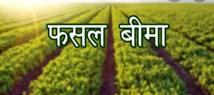 सिरमौर के किसान 15 जुलाई तक मक्की व धान की फसलों का करवा सकेंगे बीमा
