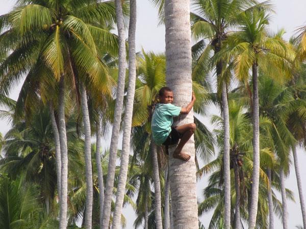 coconut-climber-sml
