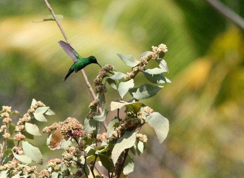 garden-emerald