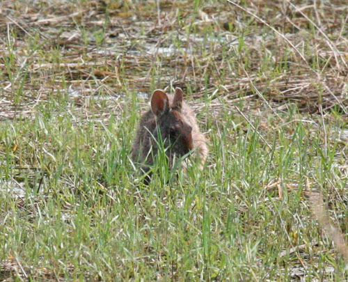blog-rabbit