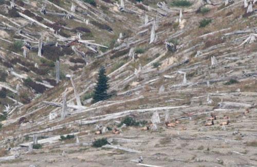 elk-on-hillside1