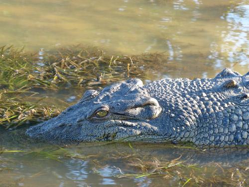 12-crocodile2-blog