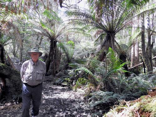don-at-mavista-rainforest-blog