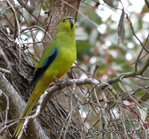 elegant-parrot-blog