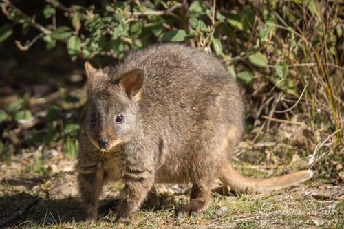 pademelon-blog
