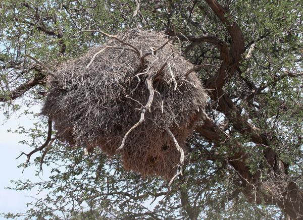 soc-weaver-nest