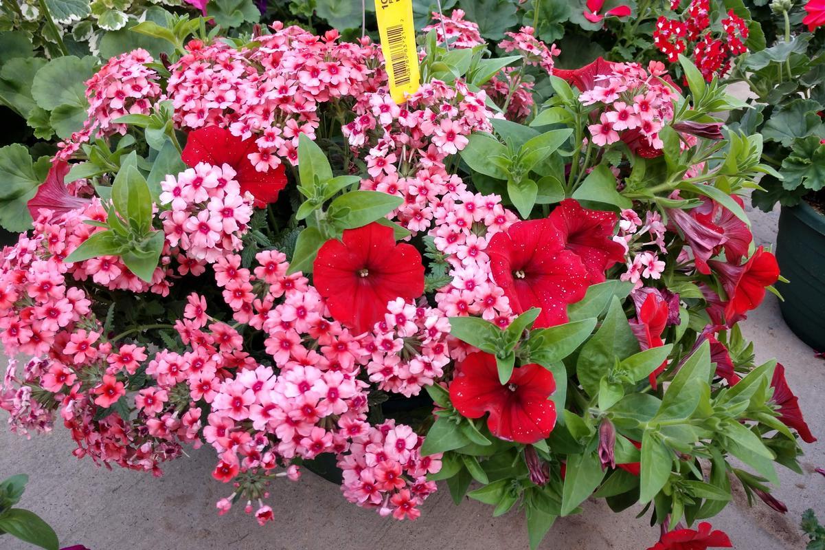 2020 Flower Basket Fundraiser
