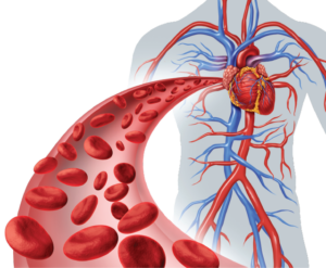 Angiogenesis creates new blood vessels