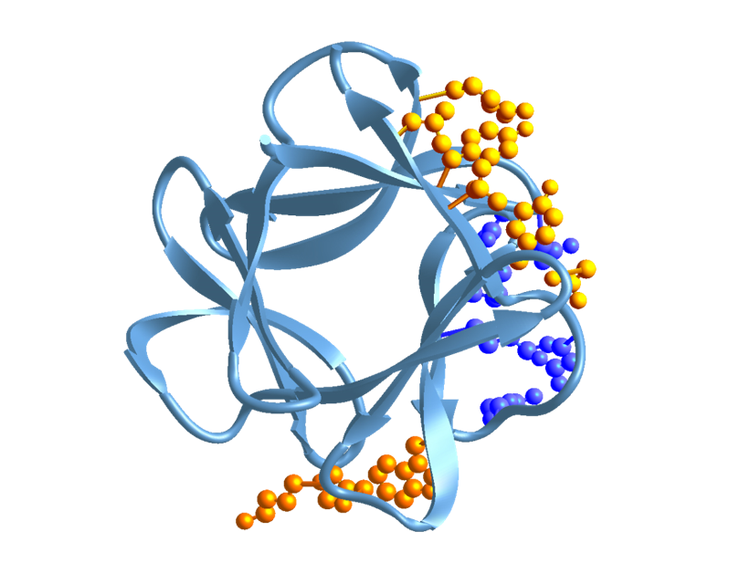 FGF-1 Protein
