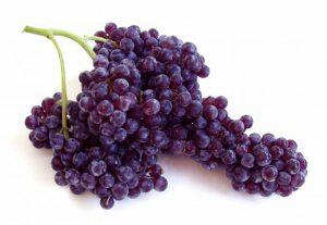 Champagne grapes