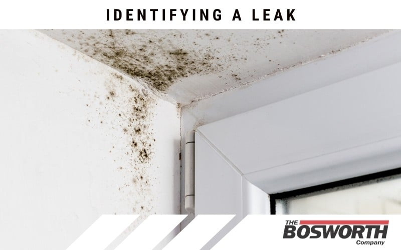 mold on your walls a sign of a leak