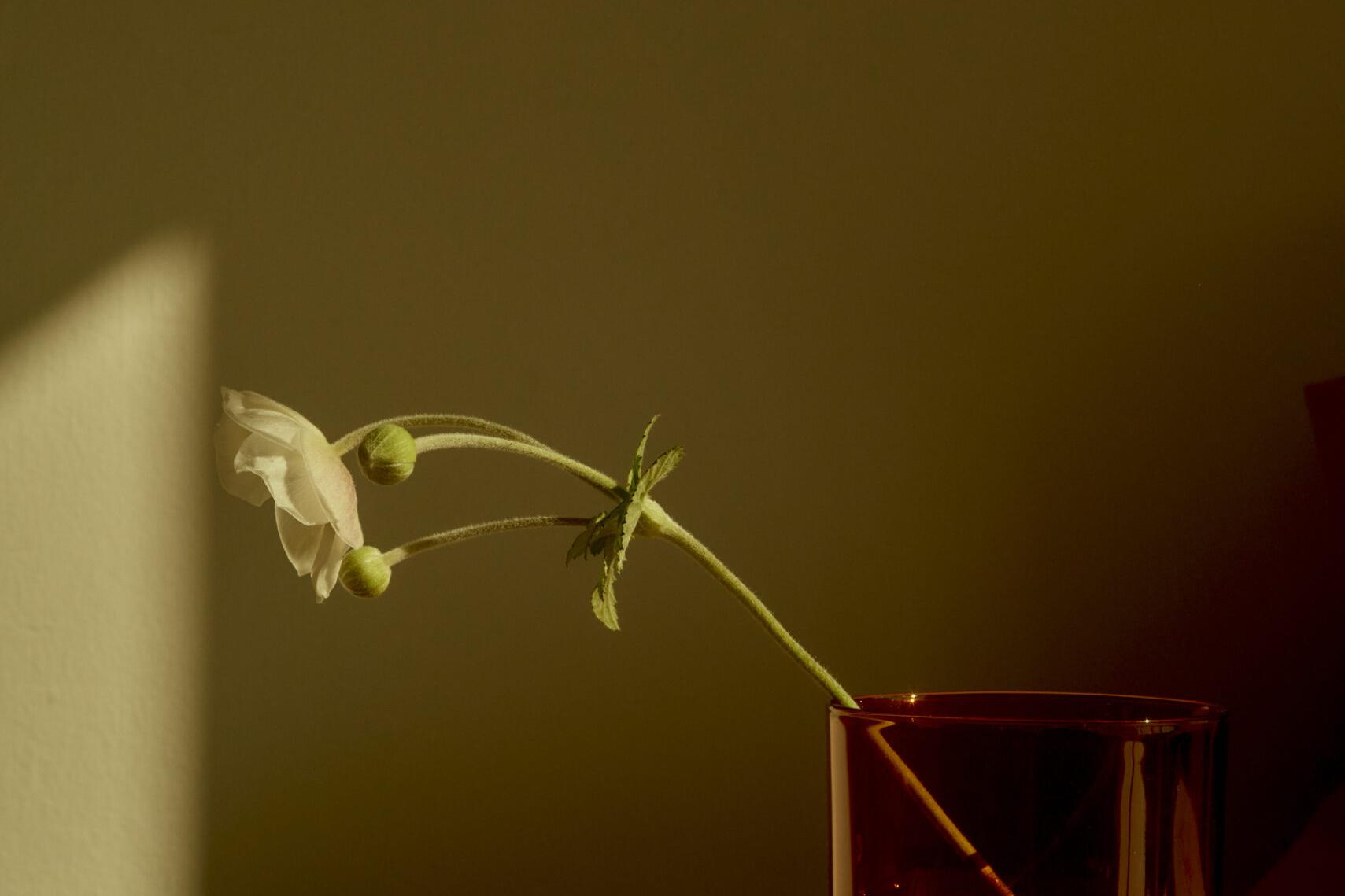 UMENCO by Saskia Wilson