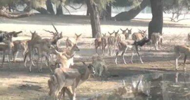 بلوچستان میں جنگلی حیات خطرے میں