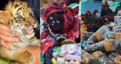 جانوروں کی سمگلنگ سے متعلق پانچ عجیب و غریب واقعات