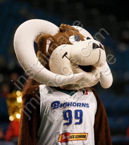 Bruno the Bighorn