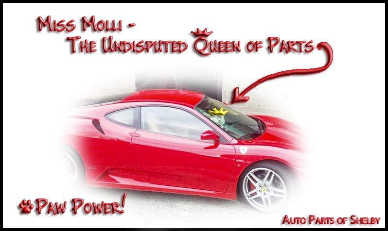 Molli - Queen of Parts