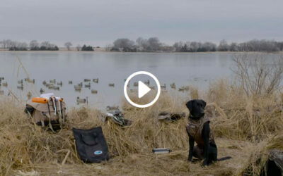 Gun Dog Training: Multiple Marks