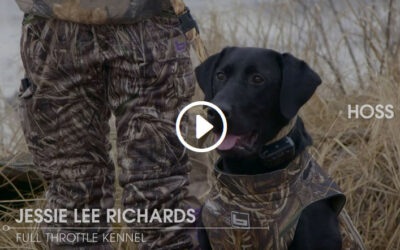 Gun Dog Training: Steadiness Drill