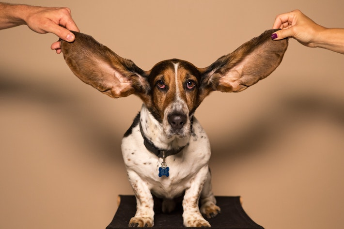 Six Things You Should Know About Your Ears