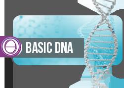 Foundation Seminar – Basic / Level 1