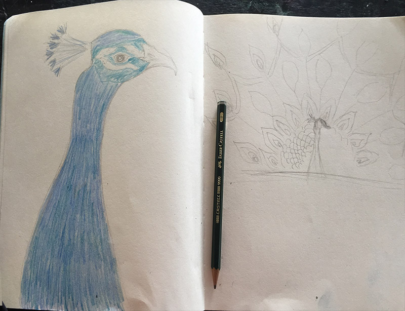 Christina Erickson's sketchbook Peacock designs