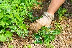 flower bed maintenance omaha | yard care omaha