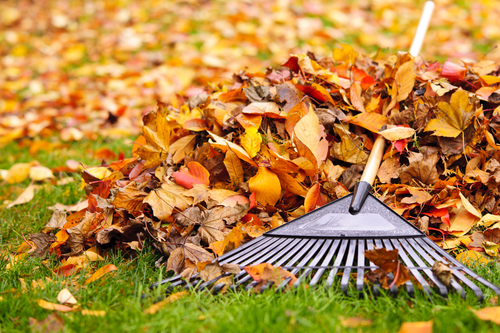 Omaha fall yard clean up raking leaves & picking up after storms.