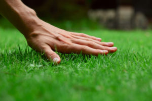 Lawn Mowing Omaha, Lawn Care Omaha and Lawn Chemical Applications Omaha by Nebraska Yard Care