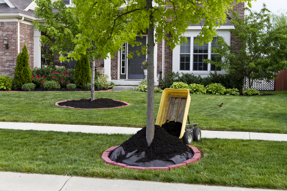 yard cleanup Omaha by Nebraska Yard Care