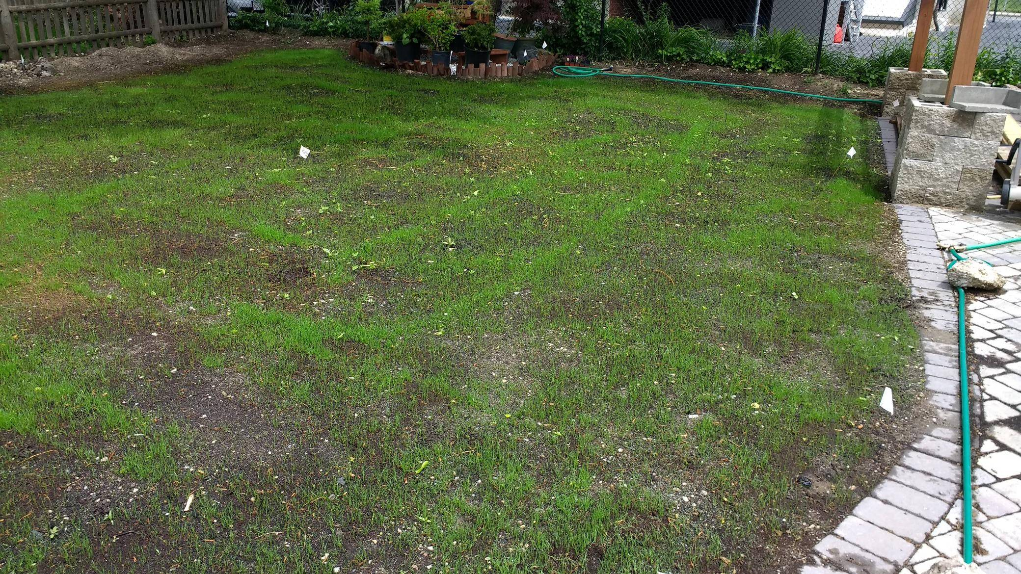 lawn care in Omaha