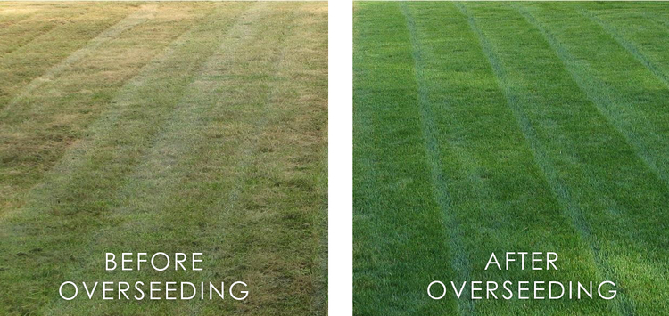 overseeding | Lawn Care Omaha