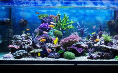 DIY Part 4 – Aquarium Lighting Fixtures
