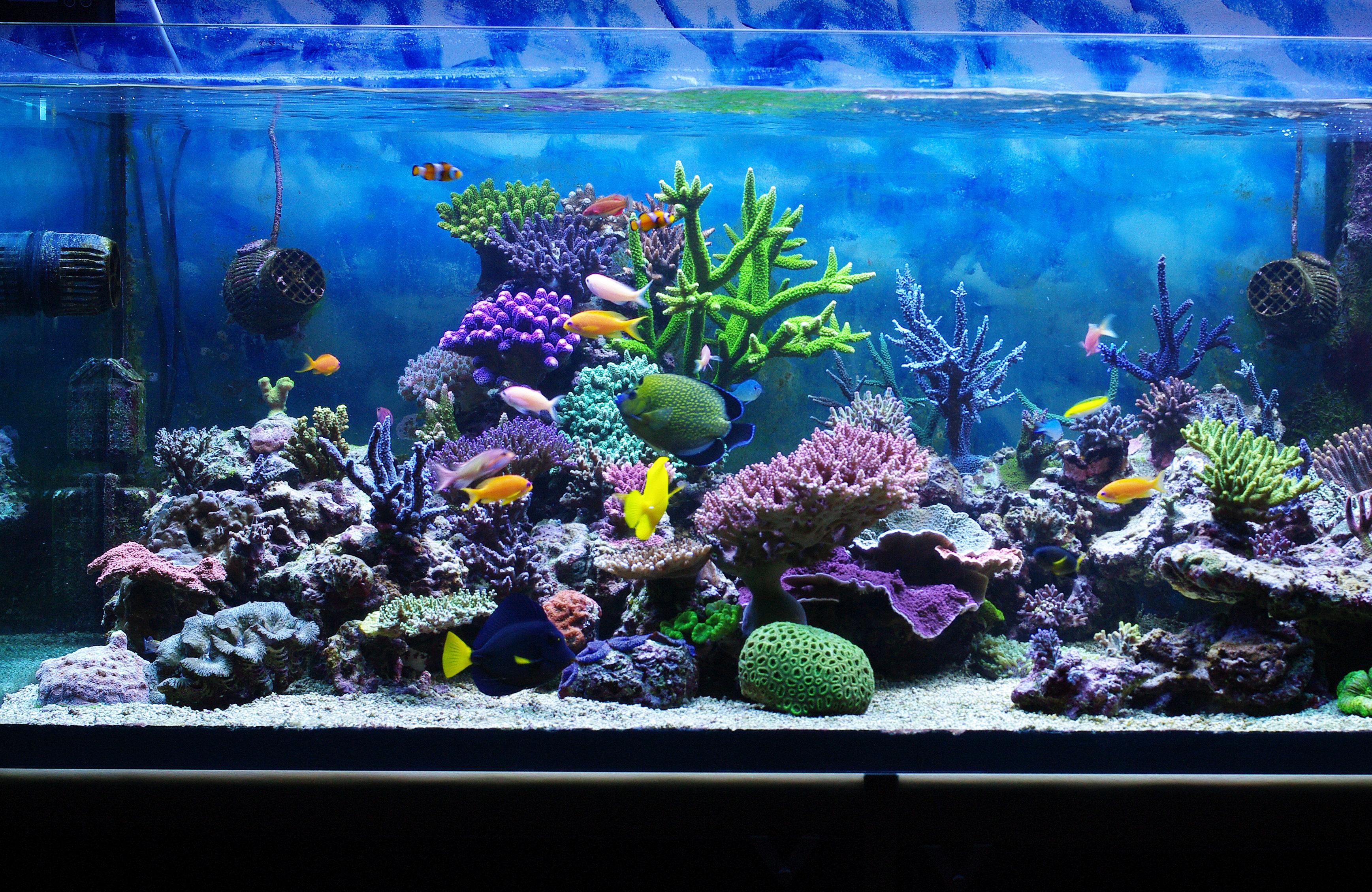 aquarium maintenance dallas fort worth